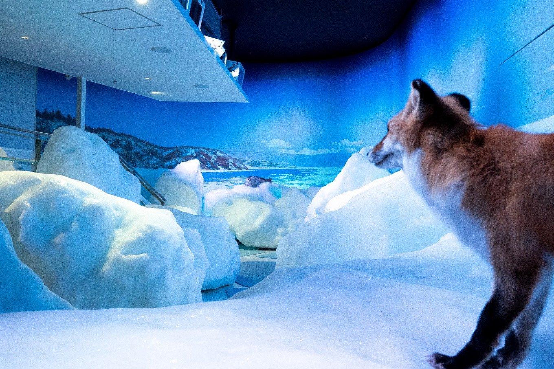撮影地:オホーツク流氷館