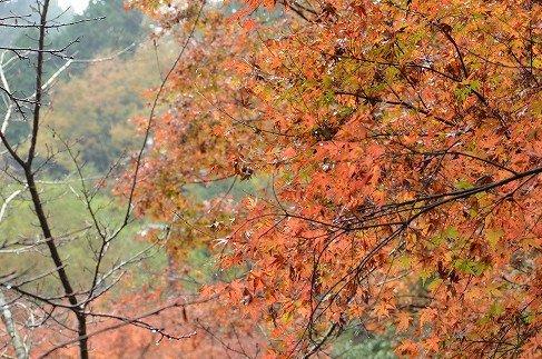 蓮華寺池公園の紅葉