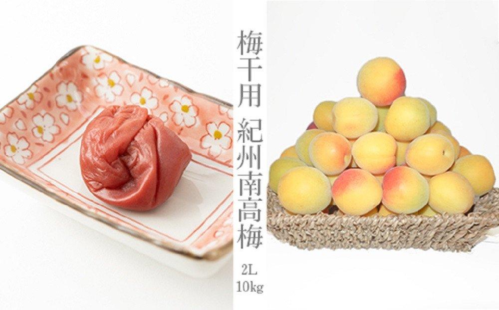 南高梅(生梅)2Lサイズ10kg入り箱(一粒の平均果実重さ約25g)