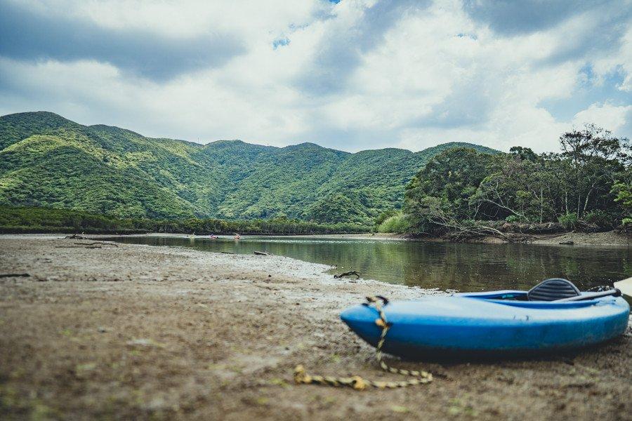 撮影地:黒潮の森マングローブ
