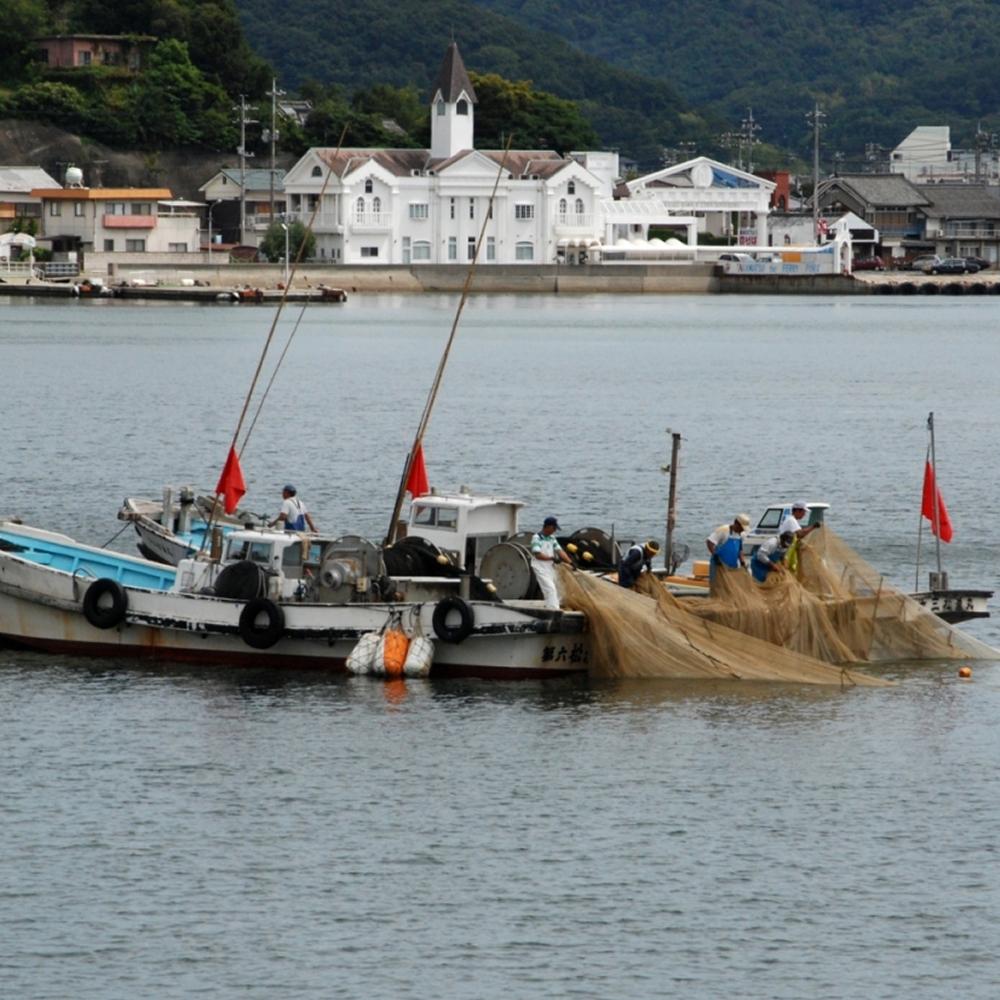 草壁港沖の鰯網漁