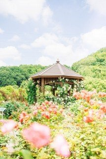 ◆花フェスタ記念公園