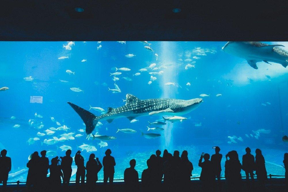 撮影地:美ら海水族館