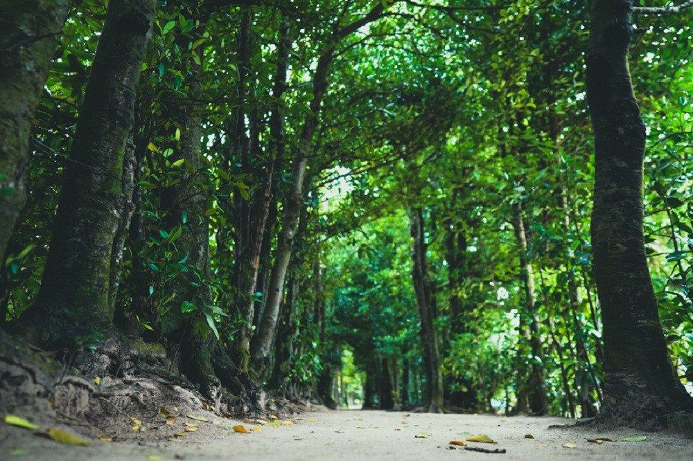 撮影地:備瀬のフクギ並木