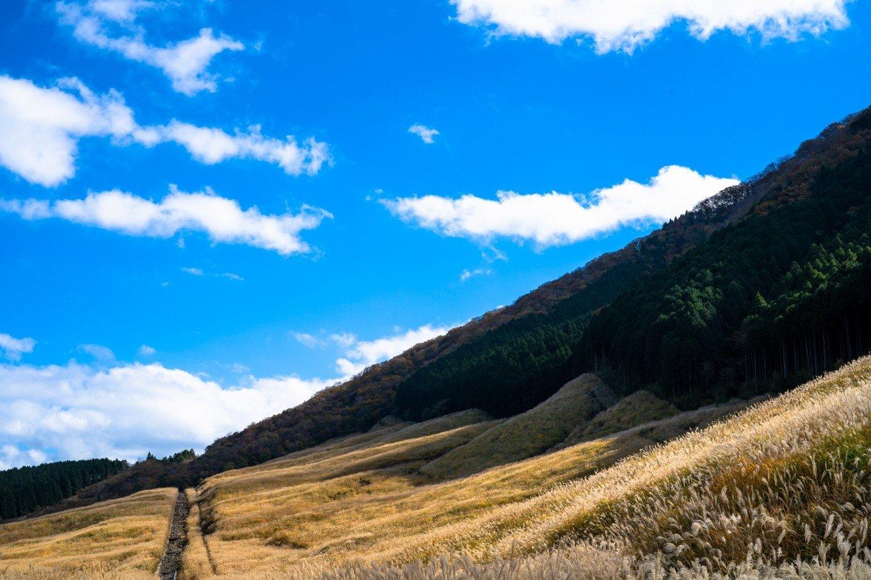 仙石原すすき草原