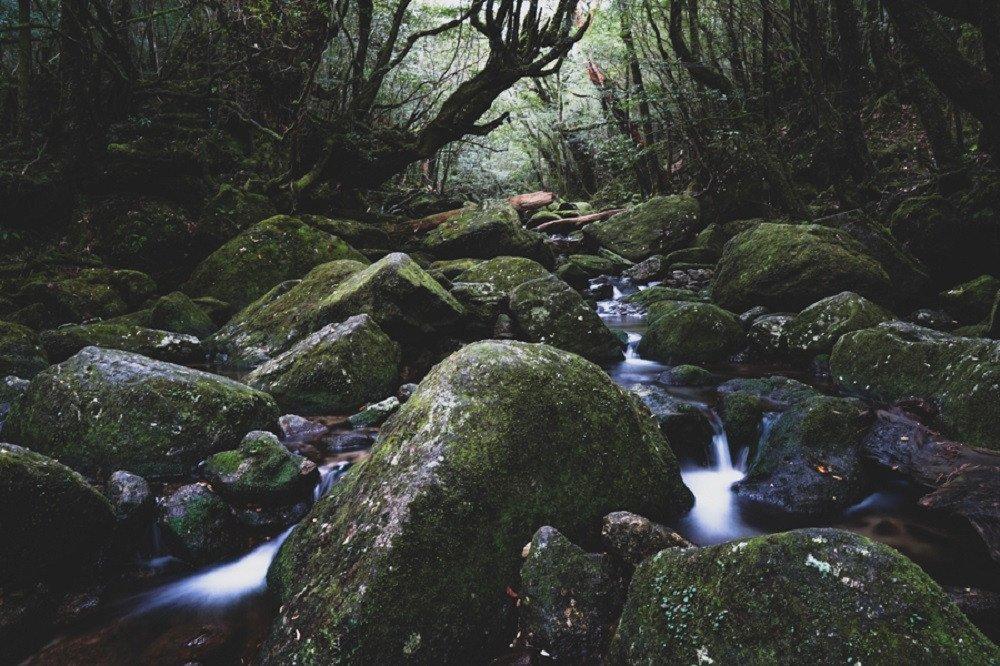 撮影地:白谷雲水峡