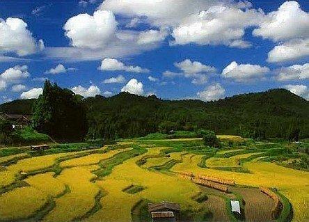 日本の原風景、「中須の棚田」