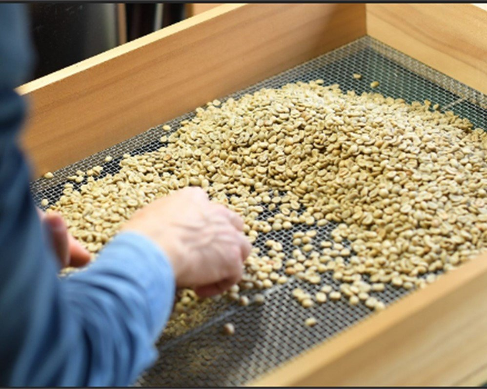 焙煎前の欠点豆の除去