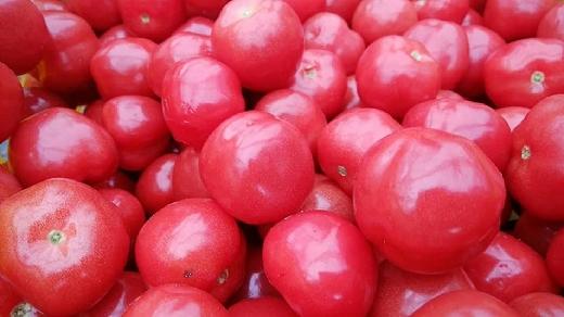 【数量限定】さくらんぼトマト200g×4P