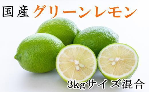☆先行予約☆【産直】和歌山産グリーンレモン約3kg(サイズ混合)【2021年10月下旬より発送】