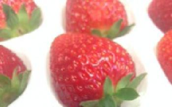 まりひめイチゴの詰め合わせ