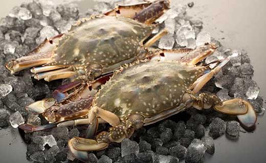 尾道産活け〆渡り蟹