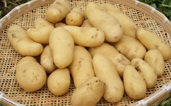 【化粧箱入り】三島馬鈴薯 5kg