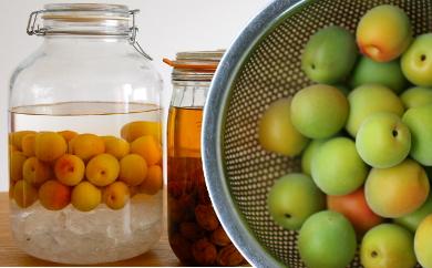 たまな食堂の有機青梅 紀州南高梅 梅酒・梅シロップ用 生梅 2kg