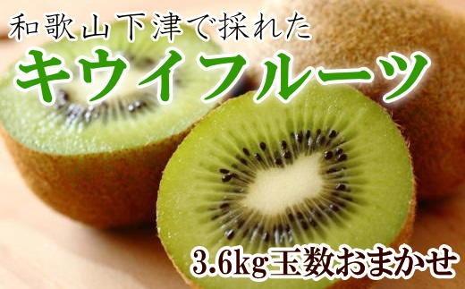 和歌山の下津で採れたキウイフルーツ約3.6kg(玉数おまかせ・秀品)