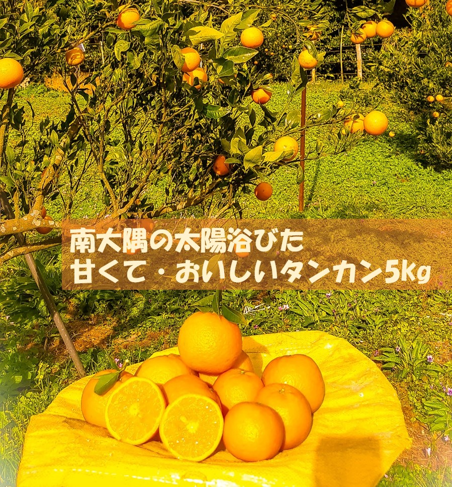 南大隅の太陽浴びた甘くて・おいしいタンカン5kg
