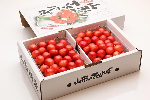 【2021年度産先行受付】果実の宝石!「佐藤錦 500g×2P L~2L」