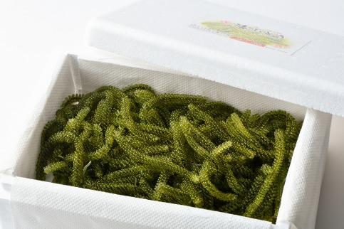 【沖縄県産】生海ぶどう 1kg(500g×2箱)