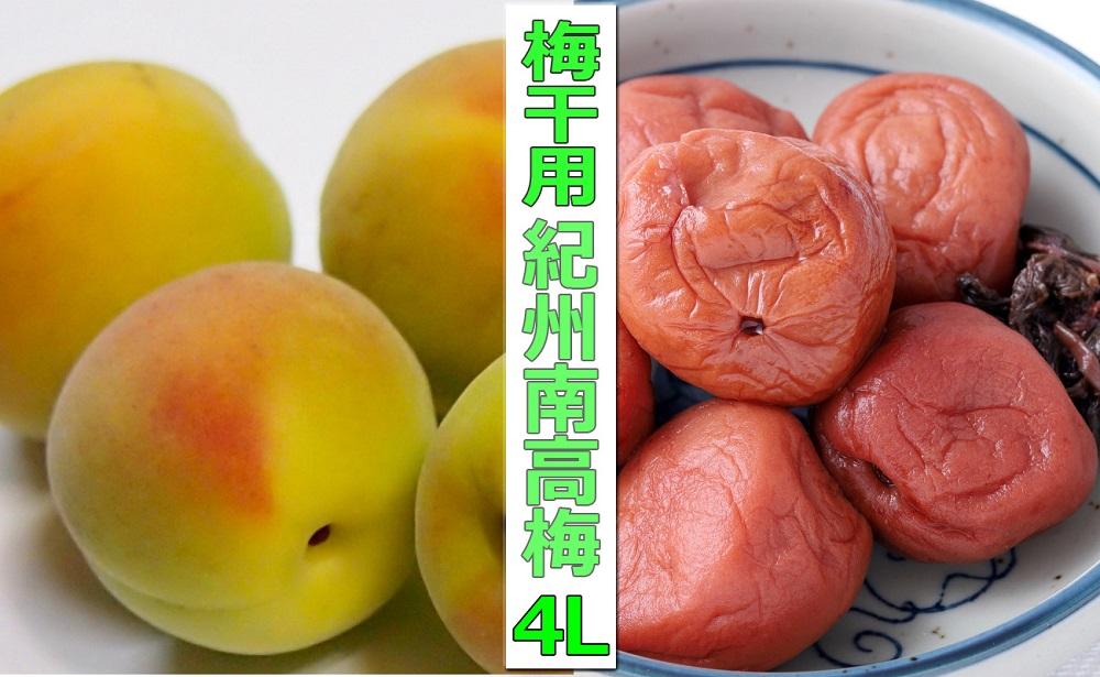 <2022年6月15日~7月7日発送発送>【梅干・梅酒用】熟南高梅(4L-10㎏)
