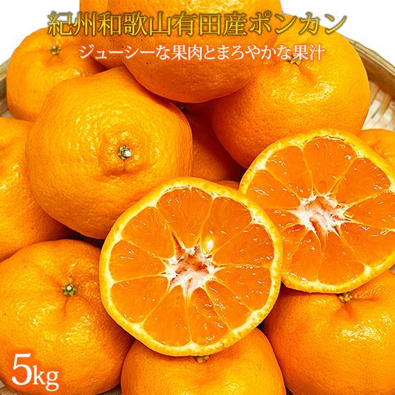 紀州和歌山有田産ポンカン 5kg