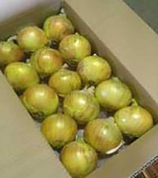 淡路島の農家の嫁から「完熟新玉ねぎ中生5㎏」