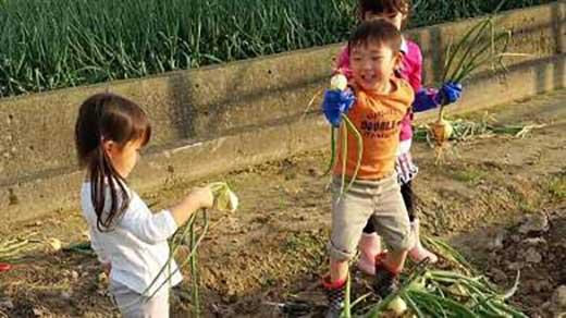 「玉ねぎの収穫体験4名」(大人2名・子供2名)と「淡路島玉ねぎのお持ち帰り5㎏」