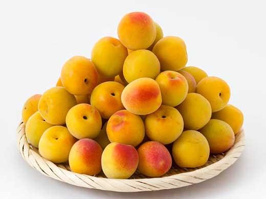 和歌山県産「紀州南高完熟梅」約5kg