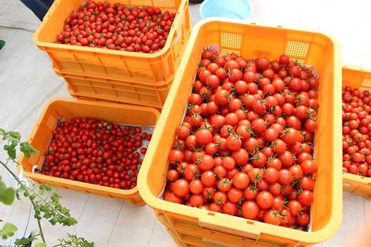 ◆ドロップファームの美容トマト食べるトマトジュース180ml4本入り