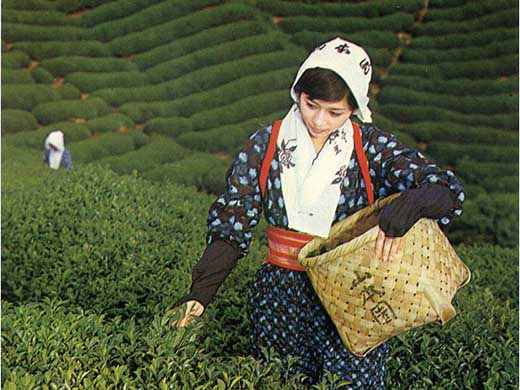茶匠「杉本順次」作特選あさみや茶