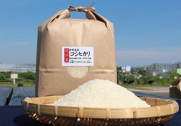 近江米「コシヒカリ」15kg