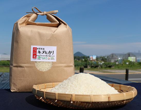近江米「キヌヒカリ」15kg