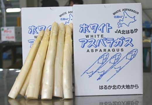 北はるか産ホワイトアスパラ2kg