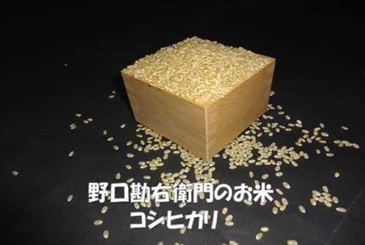 野口勘右衛門のお米「安心栽培米(コシヒカリ)」玄米30㎏