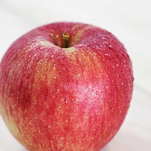 りんごの王様「ふじリンゴ」!長野県産約5kg秀品【予約受付・秋~冬発送】【A127】