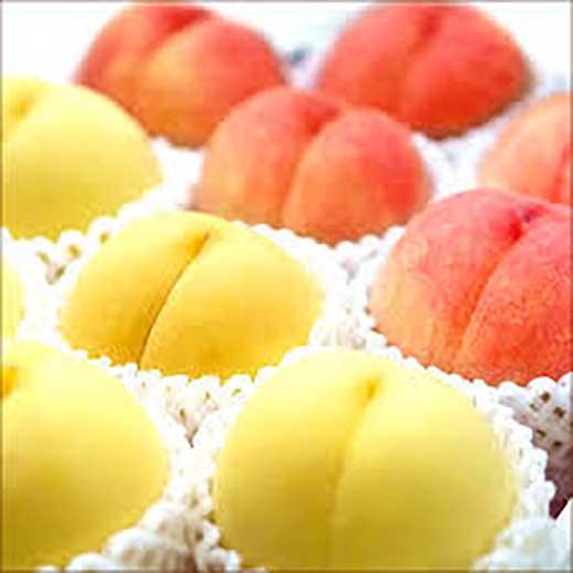 まあるい幸せ実りましたもも/川中島白桃&黄金桃詰合せ5kg(13玉~15玉)