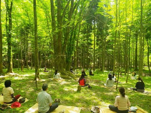 【お大師様の森林を体感する】高野山森林セラピー体験ツアー