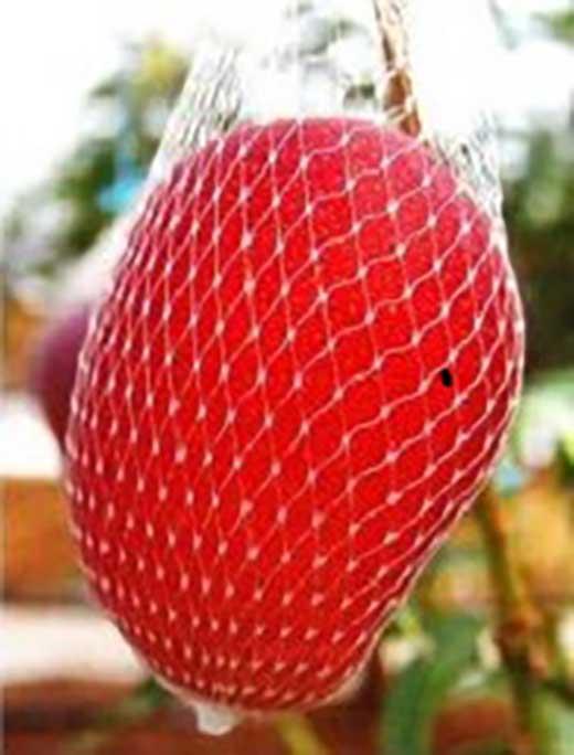 【数量限定】至高のマンゴー<明宝>1kg入