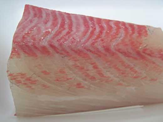 高級魚ヒラマサのお刺身用