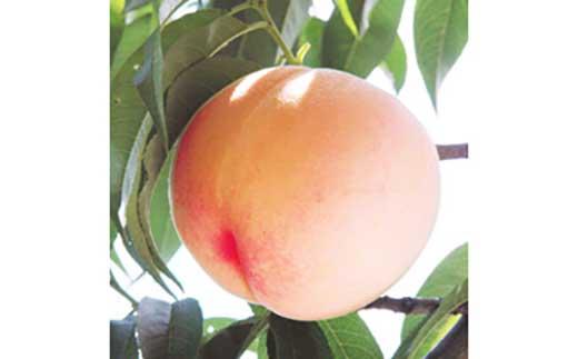 ★初夏のフルーツ桃!大きい2Lサイズ!2kg