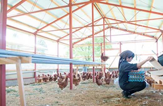 奥丹波の自然が育む純国産鶏の平飼いたまご25個