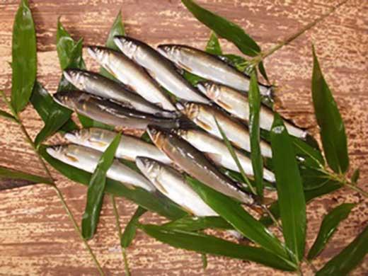 ☆7月受付開始☆由良川の網獲り天然生鮎