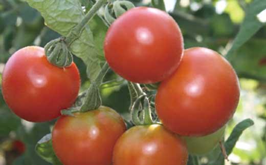 フルーツトマトジュース 2本