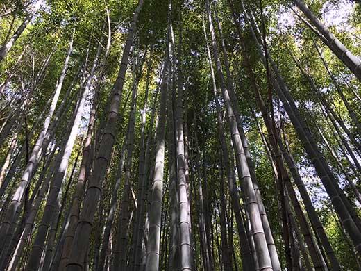 産地直送「真竹」5キロ【5月下旬~6月上旬配送】