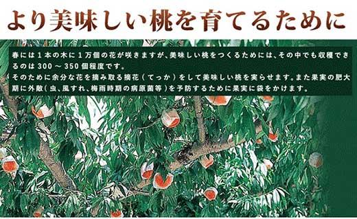 【2020年7月上旬以降発送】≪和歌山県産≫とろける白鳳(桃)約4kg 秀品≪贈答用にも≫