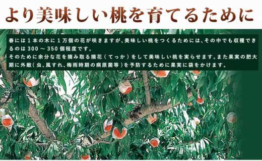【2020年7月上旬以降発送】かつらぎ町産桃の王様『白鳳』約4kg≪ご家庭用≫