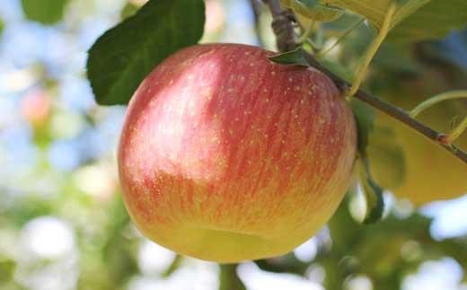 りんご(ふじ)約5kg秀