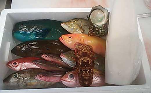 夜光貝・ソデイカ・セミエビ・鮮魚セット