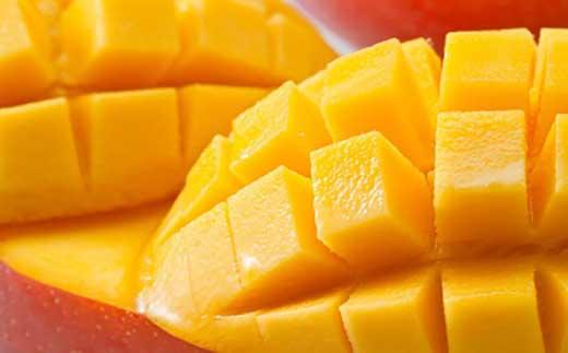 サンフルーツ糸満のマンゴー 約2kg
