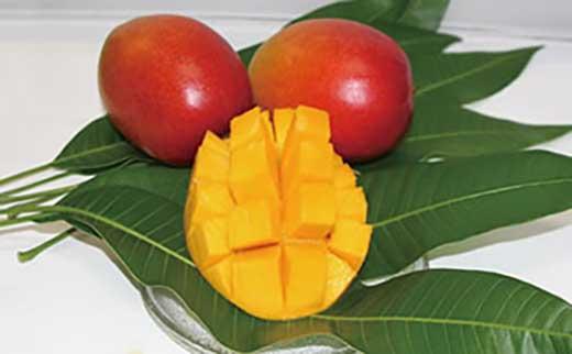 種子島産アップルマンゴー510g以上×2個