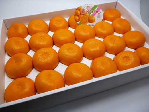 長崎産「ハウスみかん」2.5kg化粧箱入り